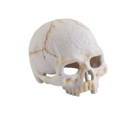 "Мини-укрытие ""Череп примата"" - Exo-Terra Primate Skull - арт.: PT2926"