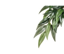 Растение иск. - Exo-Terra Hanging Rainforest Plants - Ruscus (Silk) - Small - 35 x 20 см - арт.: PT3031