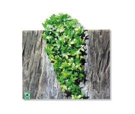 Растение иск. - JBL TerraPlanta Congo Efeu - size S - 40 см - арт.: 6801000