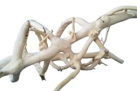 Лиана спиральная белая (нат.) - арт.: YP-236