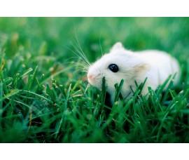Мышки (бегунки) - арт.: JB-04