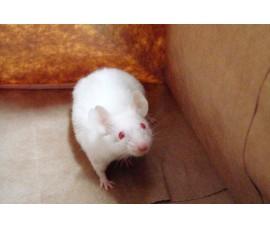 Мышки (очень крупные) - арт.: JB-06
